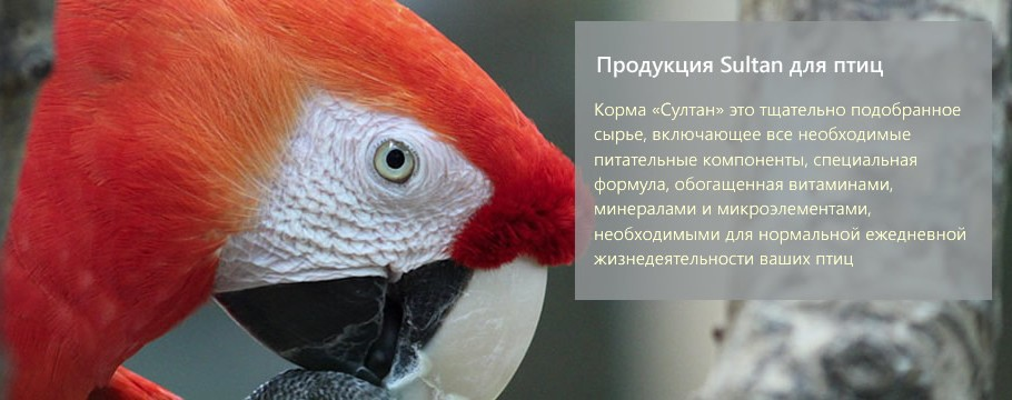 Sultan для птиц