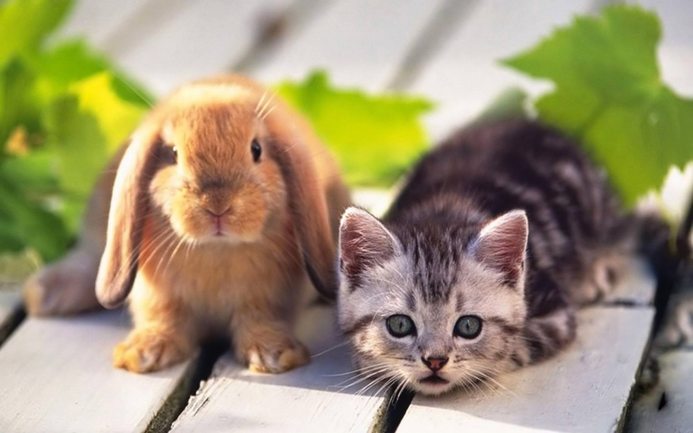 75540-home-pets-kitten-and-rabbit21